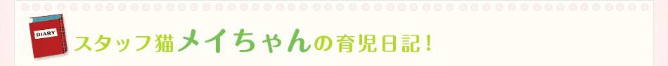 スタッフ猫メイちゃんの育児日記!