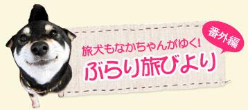 京都編 旅犬もなかちゃんがゆく!ぶらり旅びより