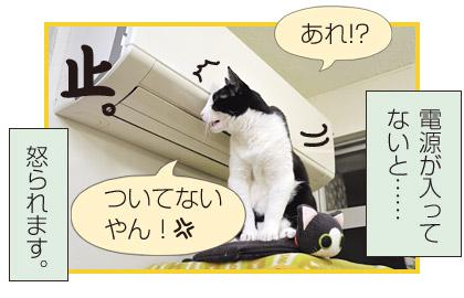 はっちゃん日記