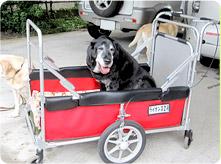 介護用カートと犬写真01