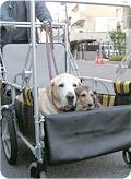 介護用カートと犬写真02