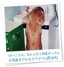 幼いころは、なんとなく細長かった。※洗面台で水をゴクゴク(1歳当時)