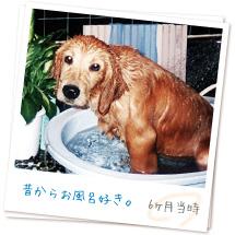 昔からお風呂好き。(6か月当時)