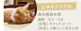 にゃんファイル~ みゃおみゃお 雑種・オス・3才 【好物】キャットフード 【性格】人懐っこく甘えん坊