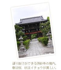 通り抜けができる頂妙寺の境内。春は桜、秋はイチョウが美しい。