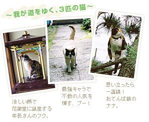 ~我が道をゆく、3匹の猫~