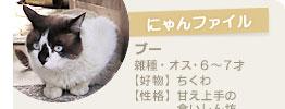 にゃんファイル~ ブー 雑種・オス・6~7才【好物】ちくわ【性格】甘え上手の食いしん坊
