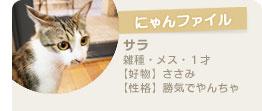 【にゃんファイル】サラ/雑種・メス・1才/好物:ささみ/性格:勝気でやんちゃ