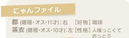 【にゃんファイル】郡(雑種・オス・11才):右 【好物】珈琲/茶衣(雑種・オス・10才):左 【性格】人懐っこくておっとり
