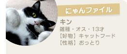 【にゃんファイル】キン(雑種・オス・13才)【好物】キャットフード【性格】おっとり