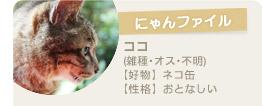 【にゃんファイル】ココ(雑種・オス・不明)【好物】ネコ缶【性格】おとなしい