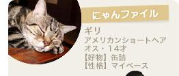 【にゃんファイル】ギリ(アメリカンショートヘア・オス・14才)【好物】缶詰【性格】マイペース