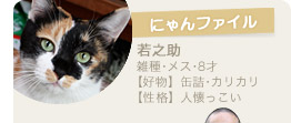 【にゃんファイル】若之助(雑種・メス・8才)【好物】缶詰・カリカリ【性格】人懐っこい