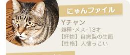【にゃんファイル】Yチャン(雑種・メス・13才)【好物】自家製の生節【性格】人懐っこい