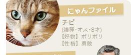 【にゃんファイル】チビ(雑種・オス・8才)【好物】ポリポリ【性格】勇敢