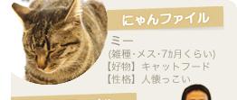 【にゃんファイル】ミー(雑種・メス・7カ月くらい)【好物】キャットフード 【性格】人懐っこい