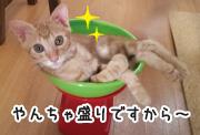 猫ちゃんたちとの生活の中で、お困りごとはありますか?