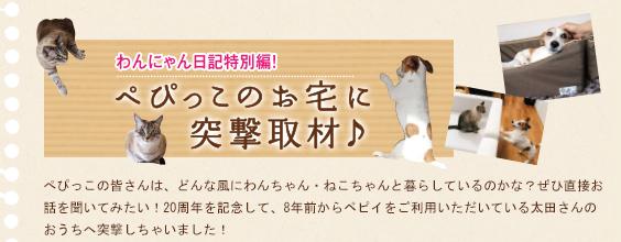 わんにゃん日記特別編!ぺぴっこのお宅に突撃取材♪
