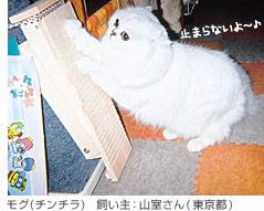 モグ(チンチラ) 飼い主:山室さん(東京都)