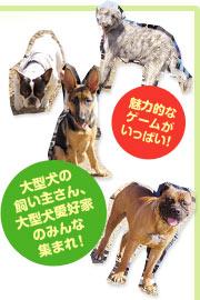 魅力的なゲームがいっぱい!大型犬の飼い主さん、大型犬愛好家のみんな集まれ!