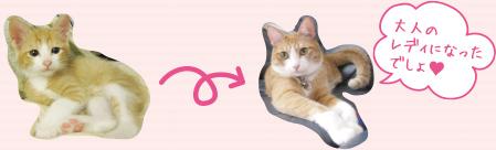 スタッフ猫キキちゃんからコメント
