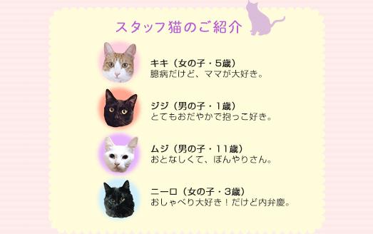 スタッフ猫のご紹介