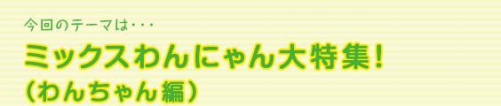 今回のテーマは・・・ミックスわんにゃん大特集!(わんちゃん編)