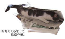 新聞にくるまって乾燥作業。