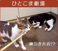 ひとこま劇場 綱引き大会!?