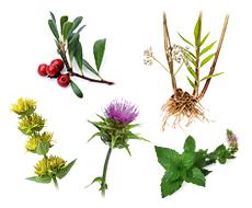 植物から抽出したエキス