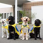 社会福祉法人 日本介助犬協会