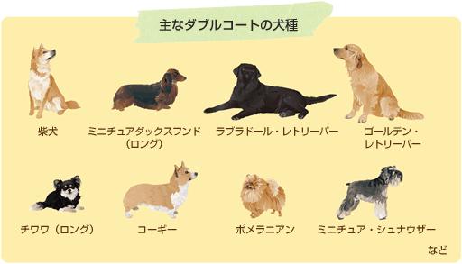 主なダブルコートの犬種