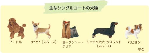 主なシングルコートの犬種