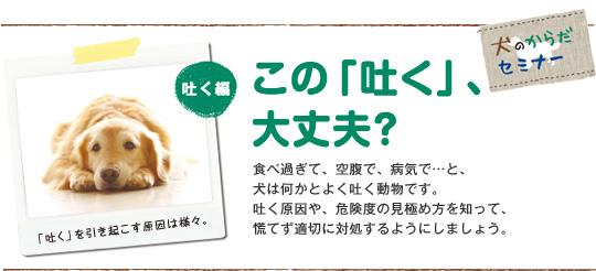 この「吐く」、大丈夫?食べ過ぎて、空腹で、病気で…と、犬は何かとよく吐く動物です。吐く原因や、危険度の見極め方を知って、慌てず適切に対処するようにしましょう。