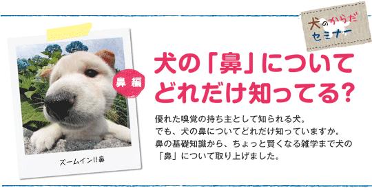 鼻の基礎知識から、ちょっと賢くなる雑学まで犬の「鼻」について取り上げました。