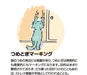 つめとぎマーキング|猫のつめの周辺には臭腺があり、つめとぎは視覚的にも嗅覚的にもマーキングになります。目的はあまり解明されておらず、立ち寄った目印つけのこともあれば、ストレス発散の手段としても行われることも。