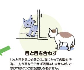目と目を合わす|じっと目を見つめるのは、猫にとって敵対行為。一方が目をそらせば問題ありませんが、でなければケンカに発展しかねません。
