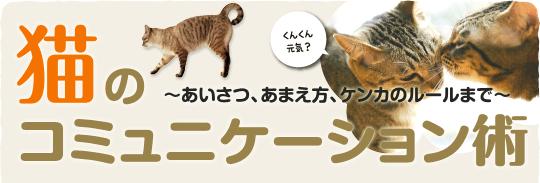 猫のコミュニケーション術 ~あいさつ、あまえ方、ケンカのルールまで~
