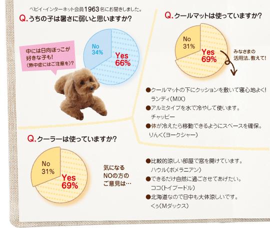 Q.うちの子は暑さに弱いと思いますか?A.Yes:66%,No:34% Q.クールマットは使っていますか?A.Yes:69%,No:31% Q.クーラーは使っていますか? A.Yes:69% No:31%