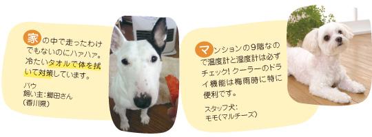 家の中で走ったわけでもないのにハァハァ。冷たいタオルで体を拭いて対策しています。バウ 飼い主:郷田さん(香川県)、マンションの9階なので温度計と湿度計は必ずチェック!クーラーのドライ機能は梅雨時に特に便利です。スタッフ犬:モモ(マルチーズ)