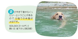 遊びすぎて後からぐったり…ということがあるので、日陰での休憩が大切です。GOLGO(ゴールデン) 飼い主:坂下さん(東京都)