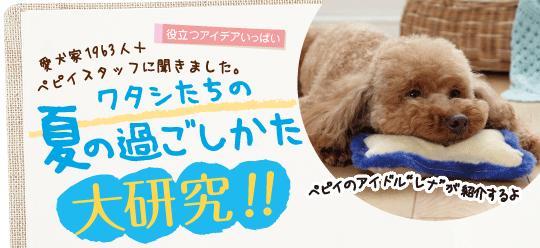 ワタシたちの夏の過ごしかた大研究!!