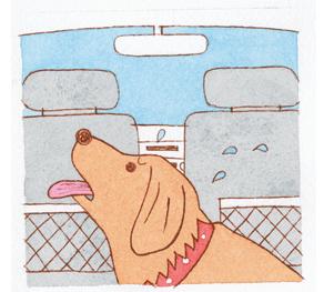 短い時間でも、愛犬を車内に残さないで。
