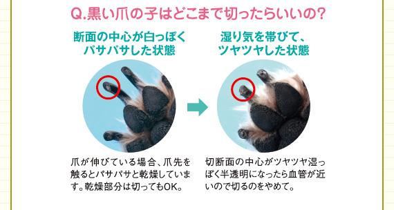 Q.黒い爪の子はどこまで切ったらいいの?