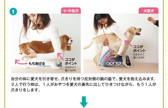 自分の体に愛犬を引き寄せ、爪きりを持つ反対側の腕の脇で、愛犬を抱え込みます。