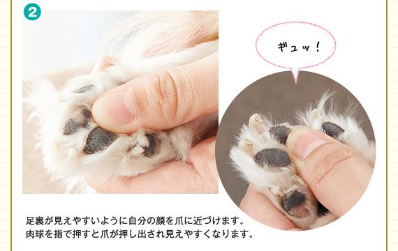 肉球を指で押すと爪が押し出され見えやすくなります。