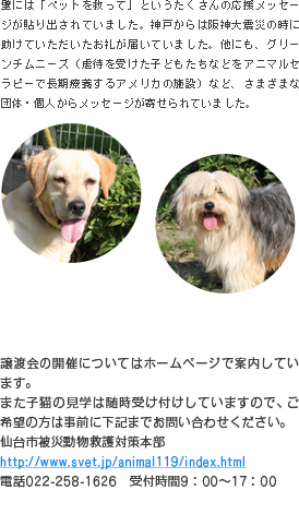 宮城県内では被災直後から各地域での被災動物の保護、また特に石巻地区においては飼い主の事情による一時預かりを行っています。