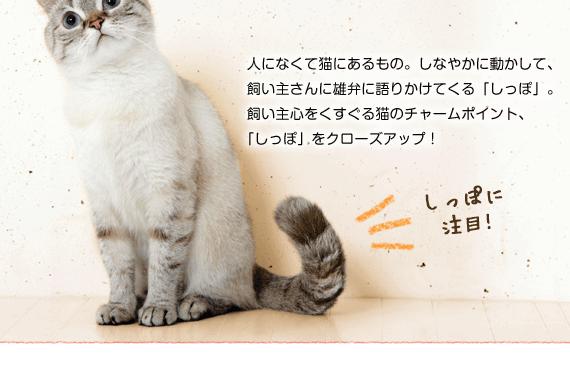人になくて猫にあるもの。しなやかに動かして、飼い主さんに雄弁に語りかけてくる「しっぽ」。飼い主心をくすぐる猫のチャームポイント、「しっぽ」をクローズアップ!