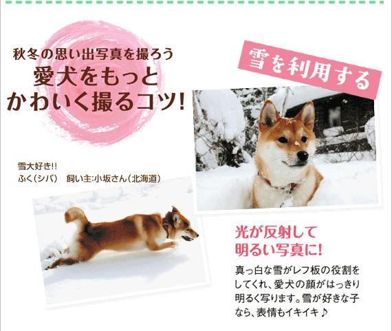 秋冬の思い出写真を撮ろう 愛犬をもっとかわいく撮るコツ!