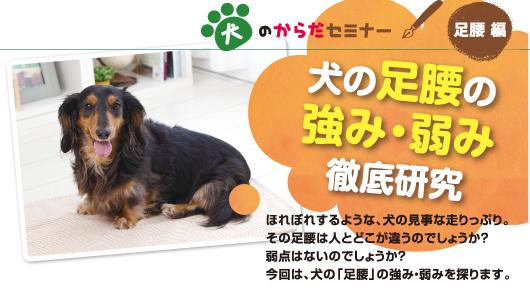 犬のからだセミナー 足腰編 犬の足腰の強み・弱み徹底研究